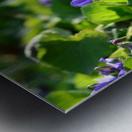 Spring sweet violets in the garden Metal print
