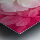 White Rose Top View Metal print