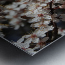 Lovely Blossoms Metal print