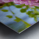Rose Acacia  Metal print