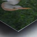 Cattle Egrets Metal print