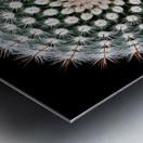 Notocactus scopa Metal print