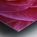 Rose Blossom Metal print