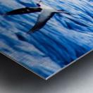 Tern Impression metal