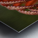 Close up of a crimson Amau fern; Hawaii, United States of America Metal print