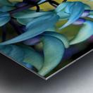 Blue jade plant; Hawaii, United States of America Metal print