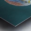 American Kestrel Metal print