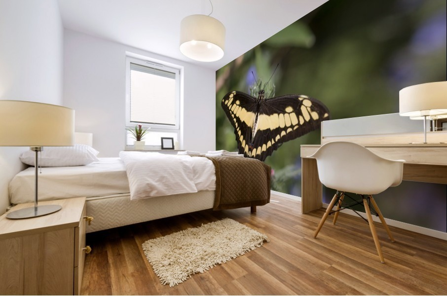 King swallowtail butterfly Mural print
