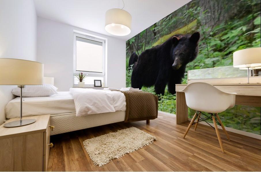 3299-Black Bear Mural print
