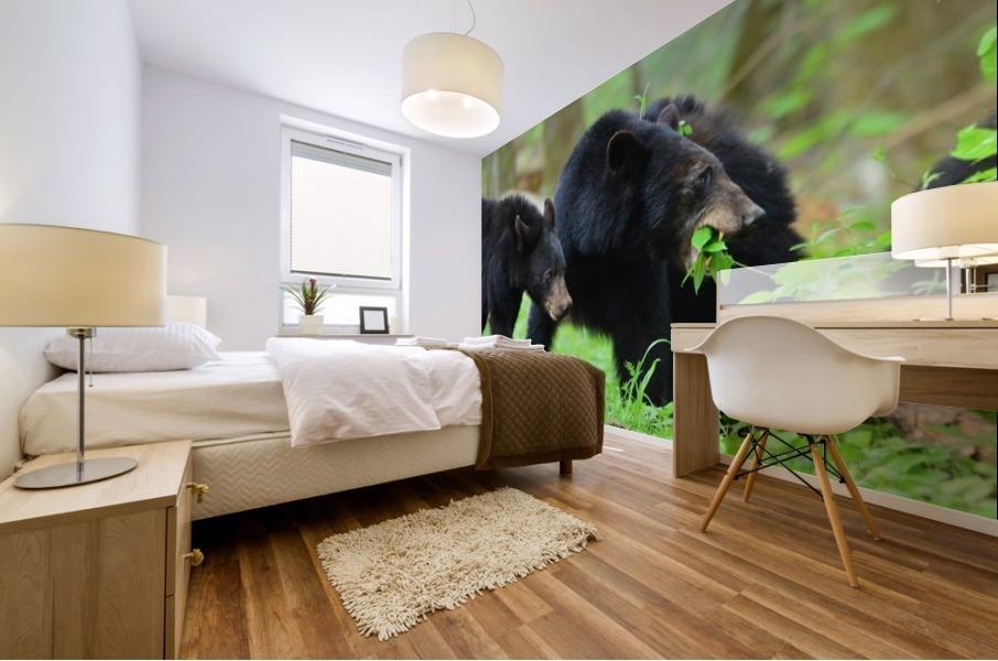 3541- Black bear Mural print