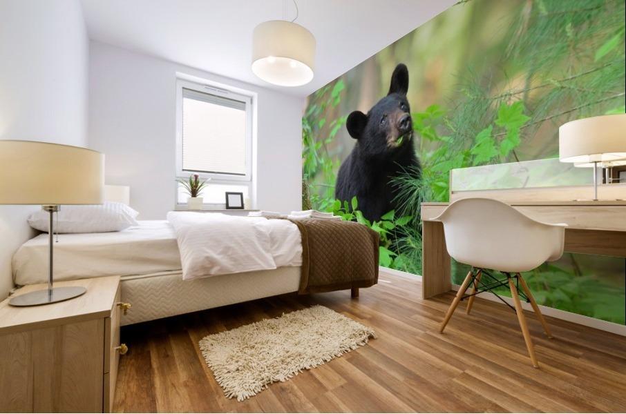 3597-Black Bear Impression murale