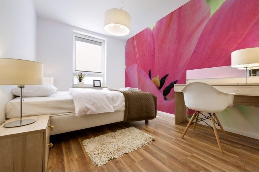 Beautiful Pink Tulip Photograph Mural print