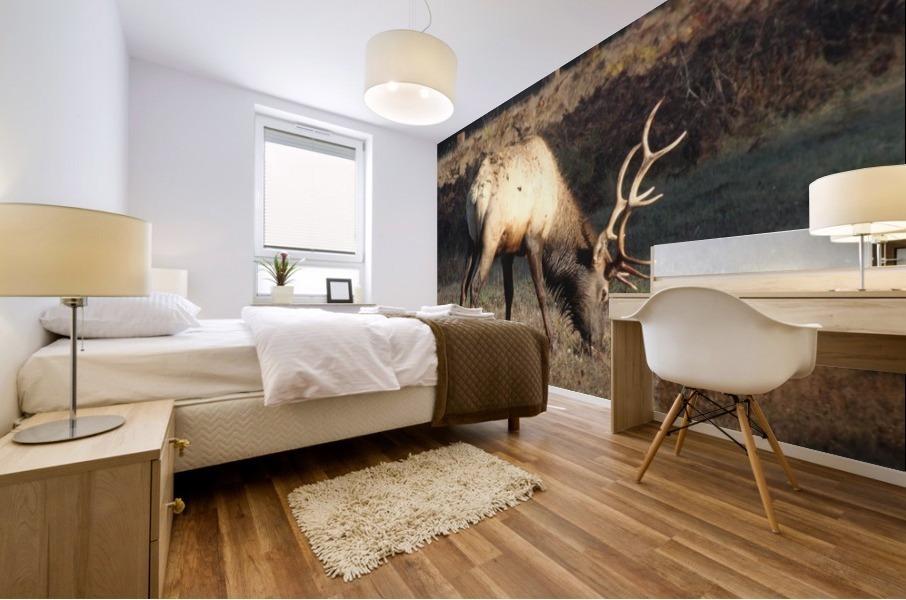 Roosevelt Elk Mural print