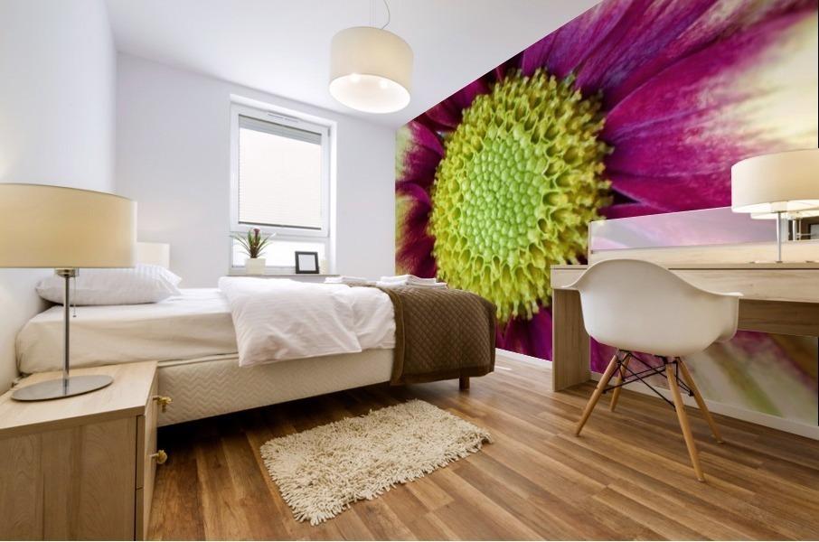 Chrysanthemum Daisy Mural print