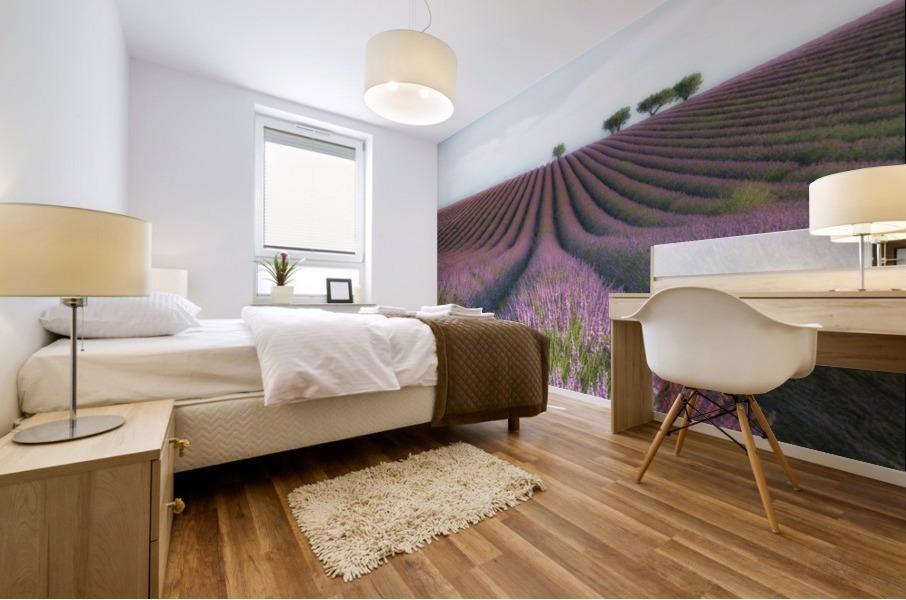 Velours de Lavender Mural print