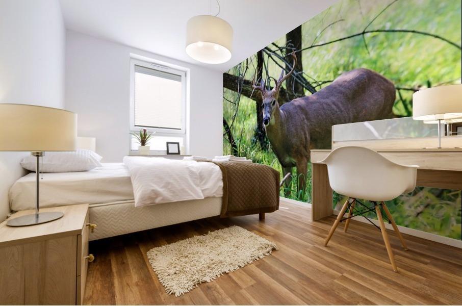 A Buck In The Grass Mural print