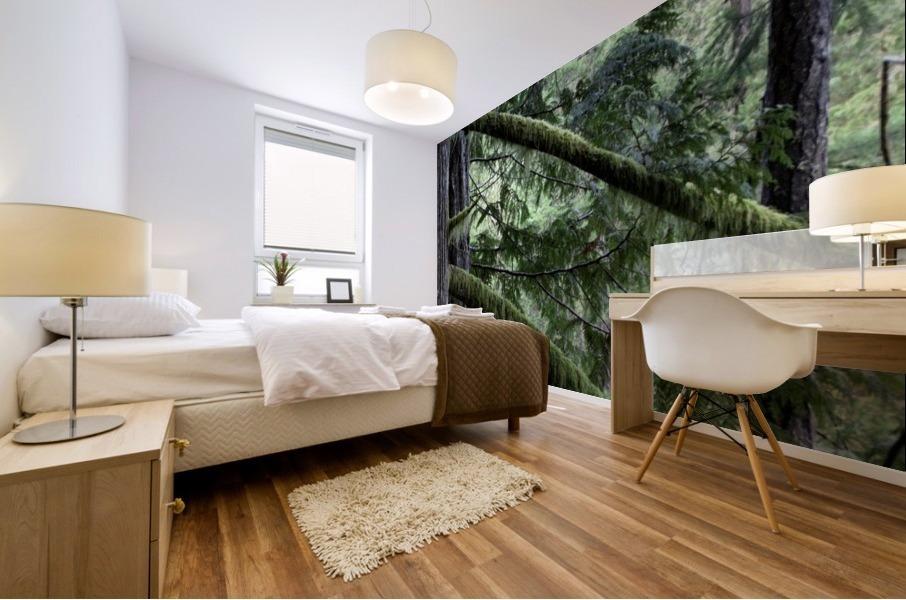 Rainforest Impression murale