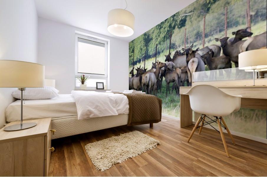 Elk Red Tailed Deer or Wapiti 16 Mural print