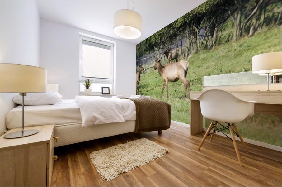 Elk Red Tailed Deer or Wapiti 4 Mural print