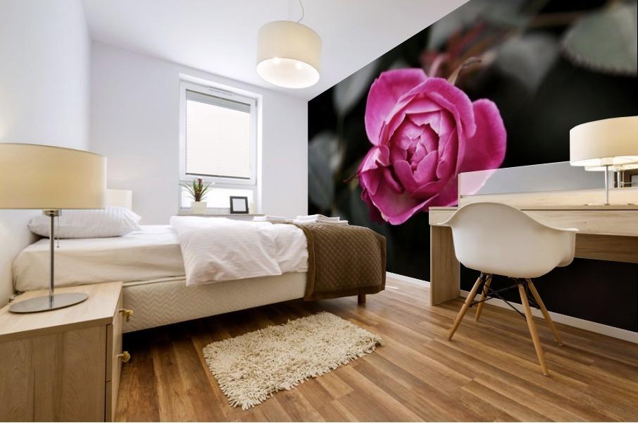Single Rose Mural print