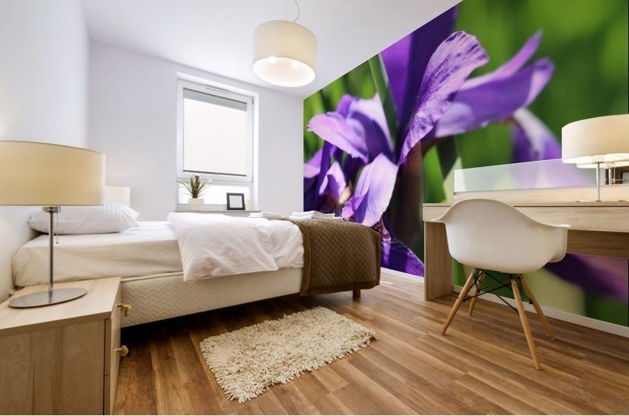 Purple Iris Mural print