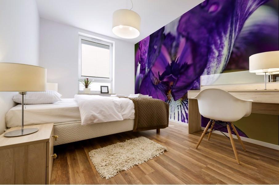 Purple With White Splash Iris Mural print