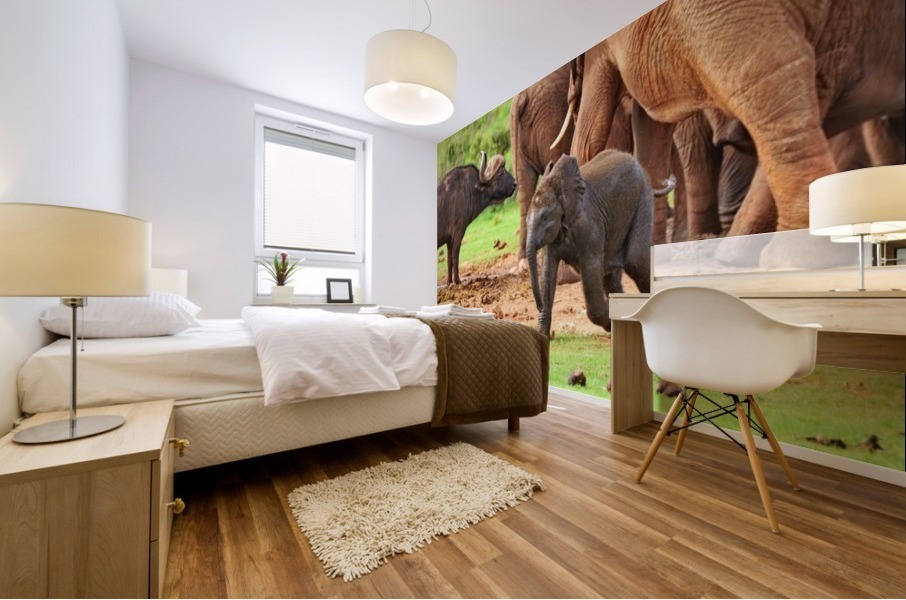 Elephant Baby 582 Mural print