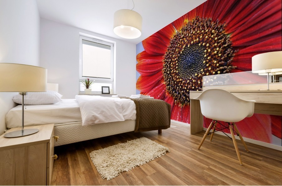 Ruby Red Sunflower Mural print