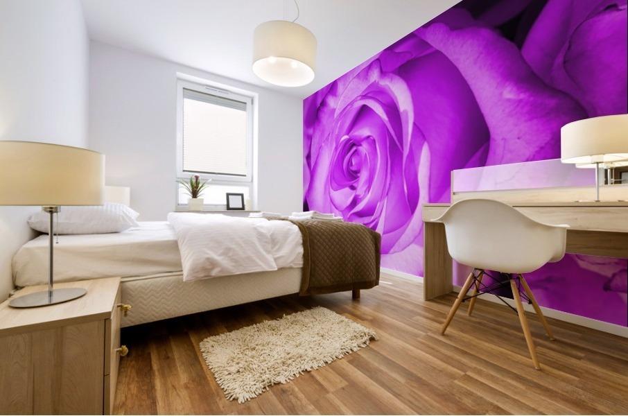 Rose purple  Mural print