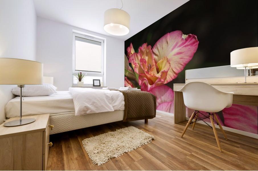 Gladiolus Display Mural print