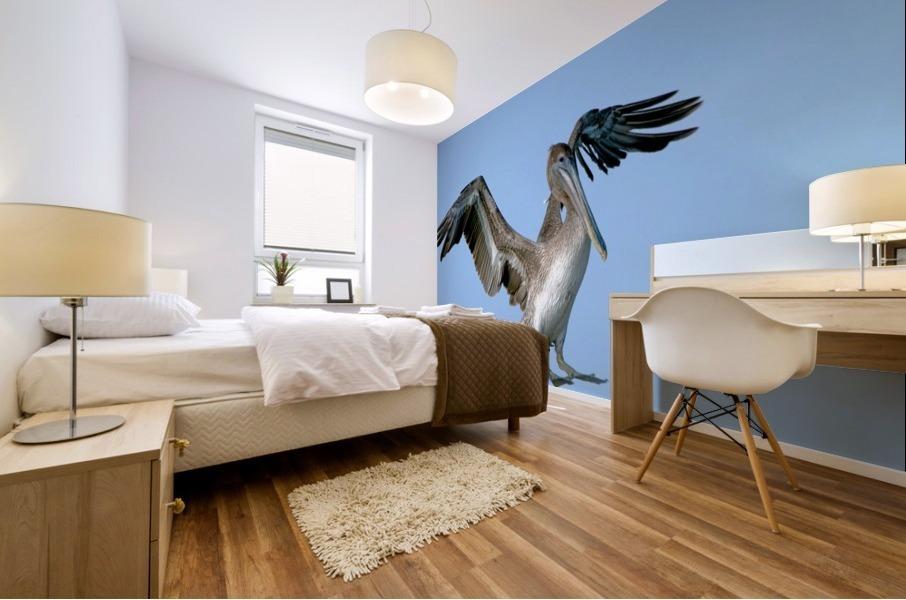 Arriving: Brown Pelican  2509 Mural print
