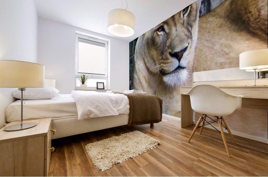 Lioness Mural print