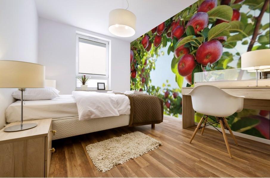 Apples Orchard- Harvest Mural print