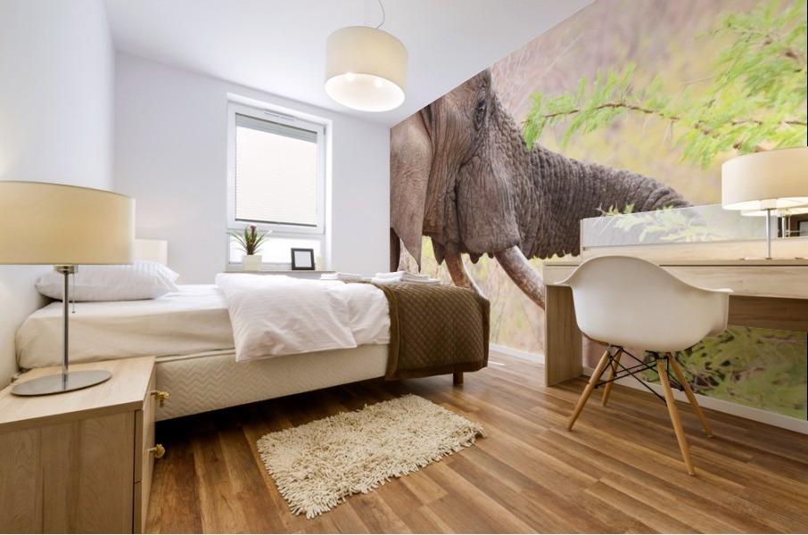 Elefant 6770 Mural print