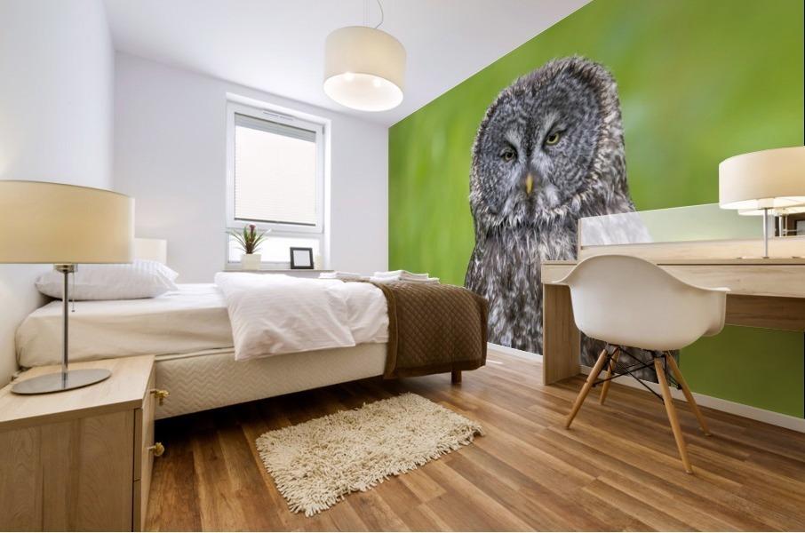 Great Grey Owl - Grey on Green Mural print