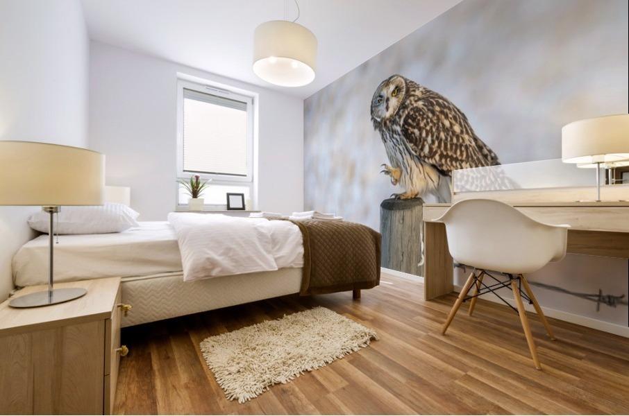 Short Eared Owl - Just an Itch Mural print