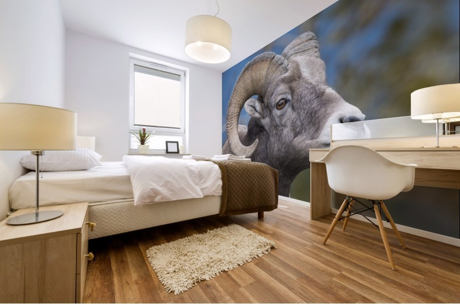Big Horn Sheep - Portrait Mural print