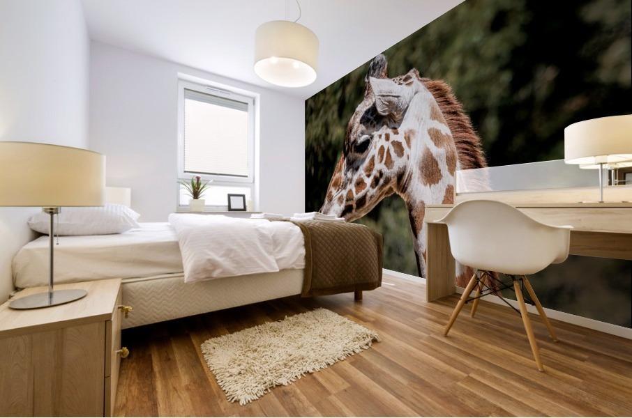 Profile of a Giraffe Mural print