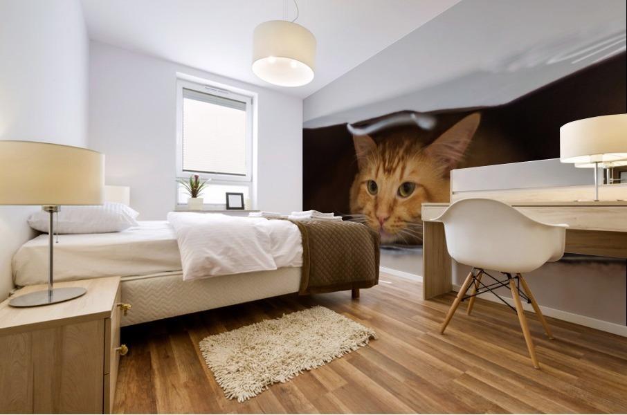 Cat In The Bag Mural print