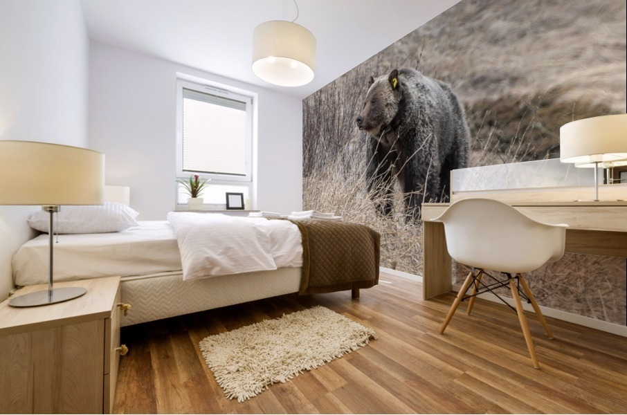 6897 - Grizzly Bear 2160 Mural print