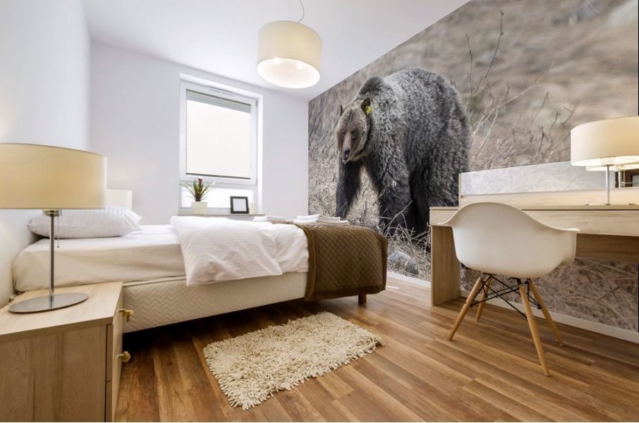 6970 - Grizzly Bear 2160 Mural print
