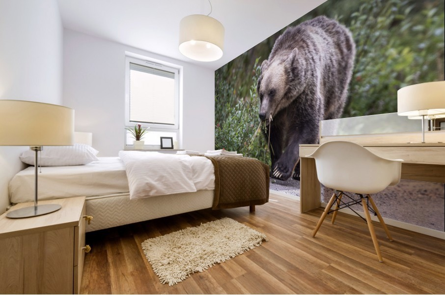 0037 - Grizzly Bear with Dandelions in Banff National Park Canada. Mural print