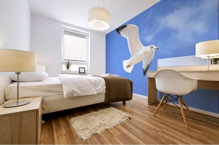 Seagull Overhead Mural print