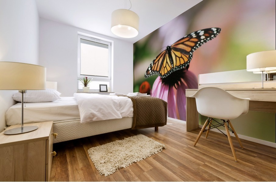 Closeup Butterfly on Cone Flower Mural print