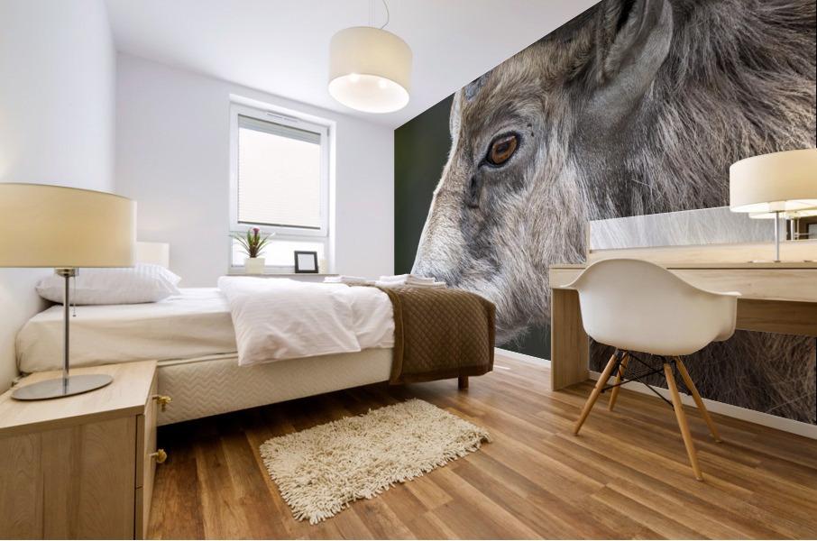 5512 - Big Horn Sheep Mural print