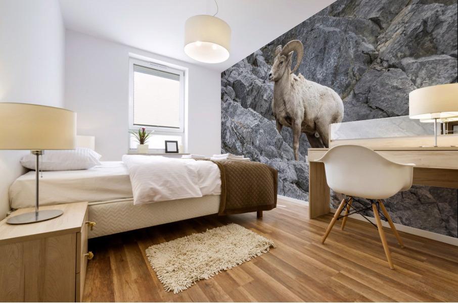 8016 - Big Horn Sheep Mural print