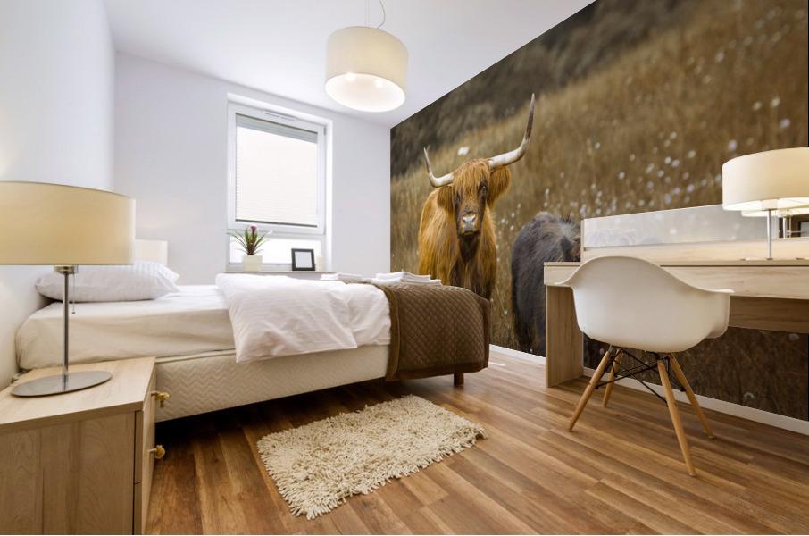 Highland Cows Mural print