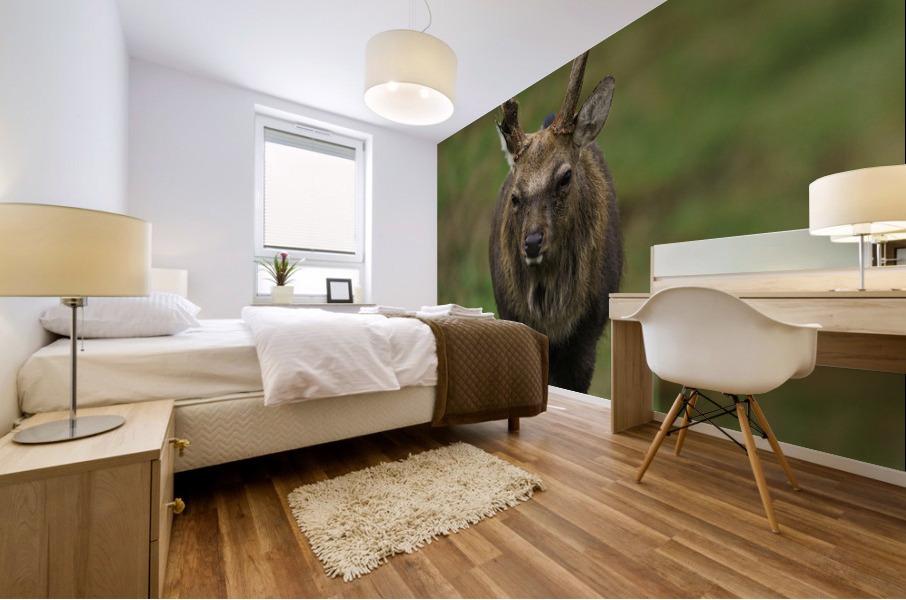 Deer Mural print
