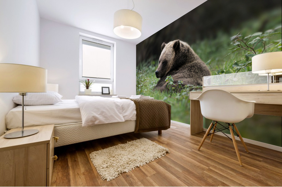 Grizzly Bear Mural print