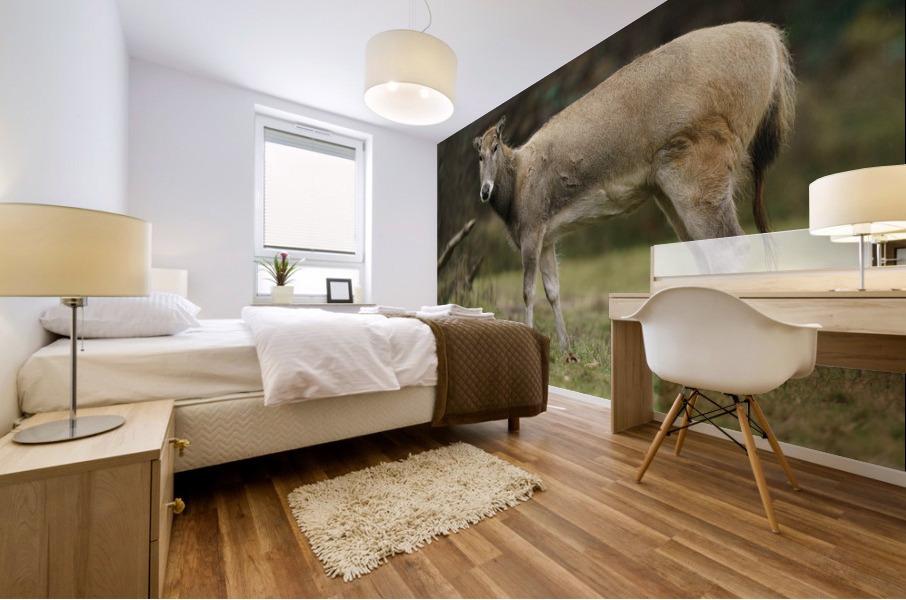 Reindeer Mural print
